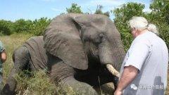非洲野象:我一直在路