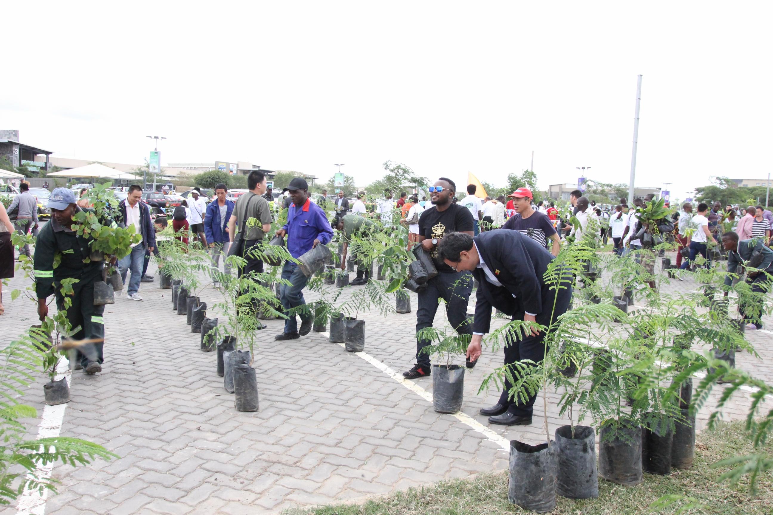 """共建""""绿色家园"""",免费发放树苗活动在赞比亚成功举办"""