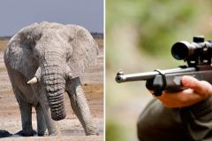 坦桑今年百头大象被猎杀 美国是大户