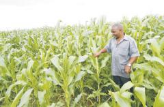 <strong>2018坦桑农民发家致富就靠它们了</strong>