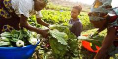 <strong>赞比亚农业发展潜力巨大,中非农业合作有望拓展</strong>
