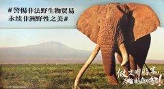<strong>中国与坦桑一同将打击非法野生动植物贸易进行到底</strong>