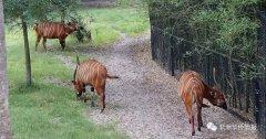 坦桑人与野生动物能和谐相处吗?