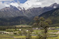 """(主题)中国西藏正在告别""""无树村"""" (副题)全区森"""
