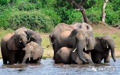 非洲六国参加卡萨内大象峰会