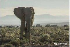 <strong>博茨瓦纳——非洲象最后的避难所</strong>